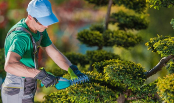 Cleaning, maintenance and coordination of gardens,parks and pest control